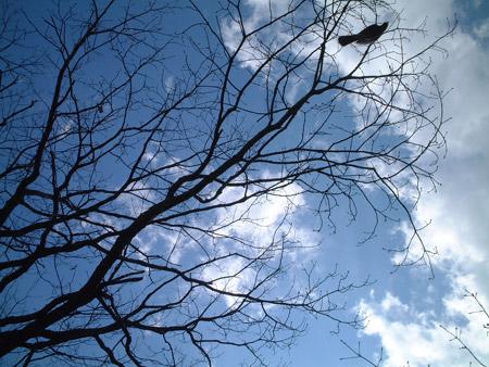 061029_bird.jpg